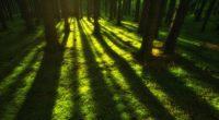 forest trees sunbeam 1551644514 200x110 - Forest Trees Sunbeam - trees wallpapers, sunbeam wallpapers, nature wallpapers, hd-wallpapers, forest wallpapers, 4k-wallpapers