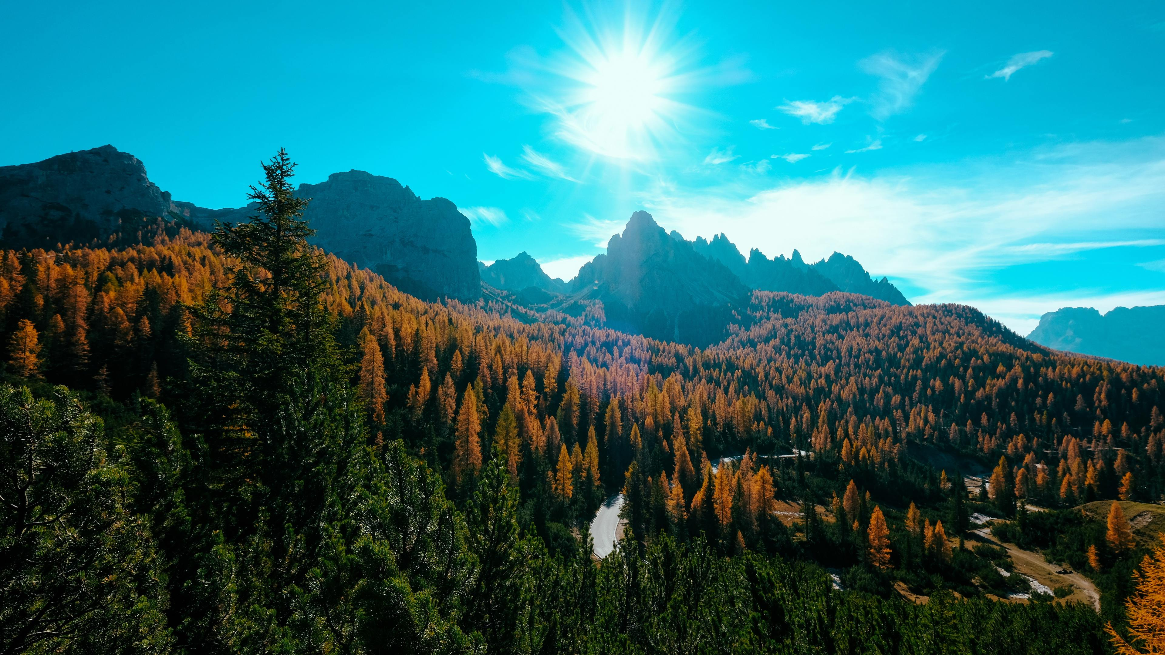 Landscape Trees Nature Forest 4k trees wallpapers, nature ...
