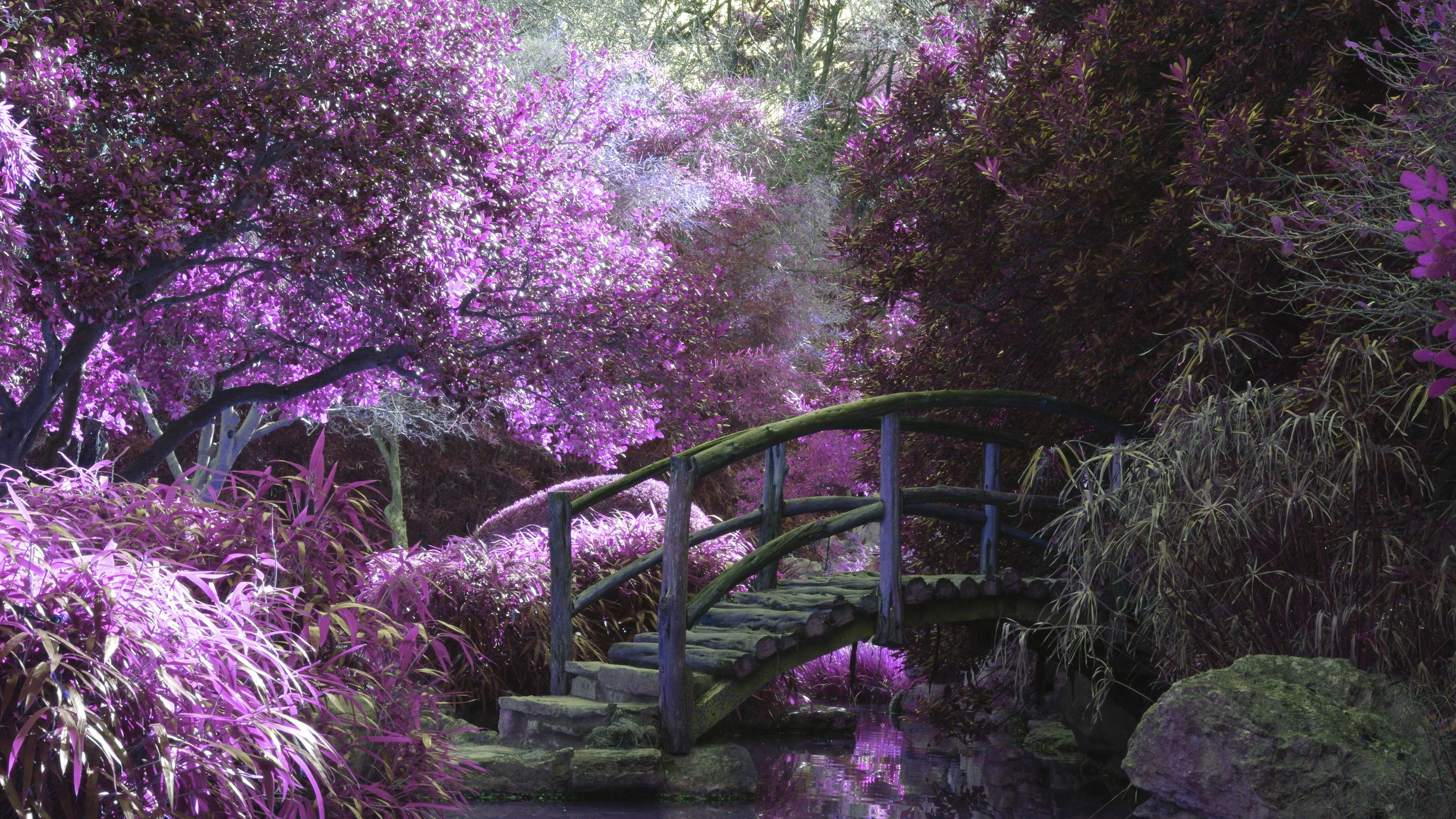 magical garden 4k 1551643691 - Magical Garden 4k - photography wallpapers, nature wallpapers, hd-wallpapers, 4k-wallpapers