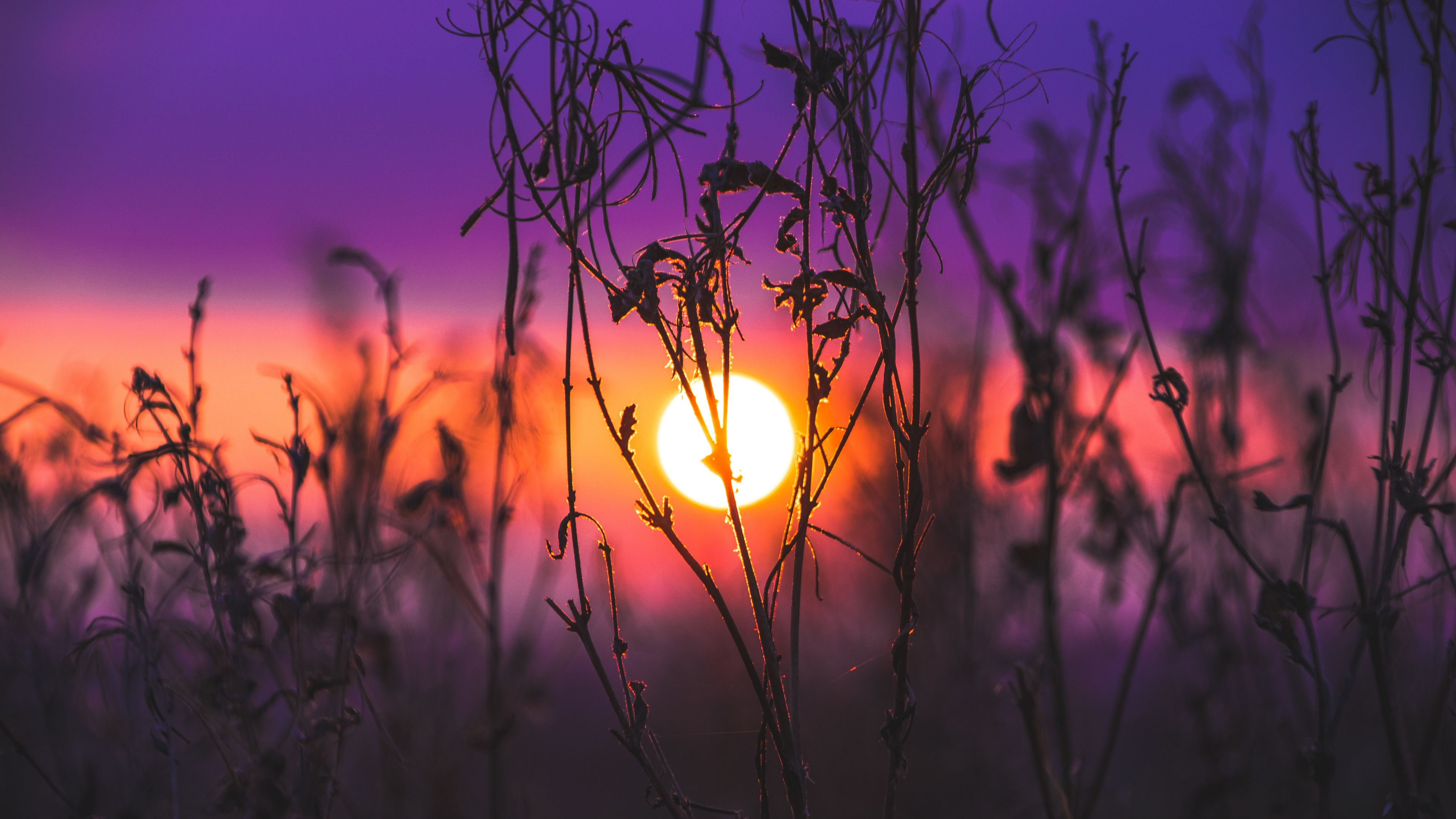 morning glow grass field 1551643340 - Morning Glow Grass Field - sunset wallpapers, sunrise wallpapers, nature wallpapers, hd-wallpapers, grass wallpapers, field wallpapers, 4k-wallpapers