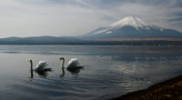 mount fuji landscape view ducks 4k 1551643720 200x110 - Mount Fuji Landscape View Ducks 4k - nature wallpapers, mountains wallpapers, mount fuji wallpapers, landscape wallpapers, hd-wallpapers, duck wallpapers, 4k-wallpapers