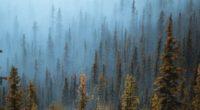pine trees fog forest 4k 1551643579 200x110 - Pine Trees Fog Forest 4k - trees wallpapers, pine wallpapers, nature wallpapers, hd-wallpapers, forest wallpapers, fog wallpapers, drone view wallpapers, 4k-wallpapers