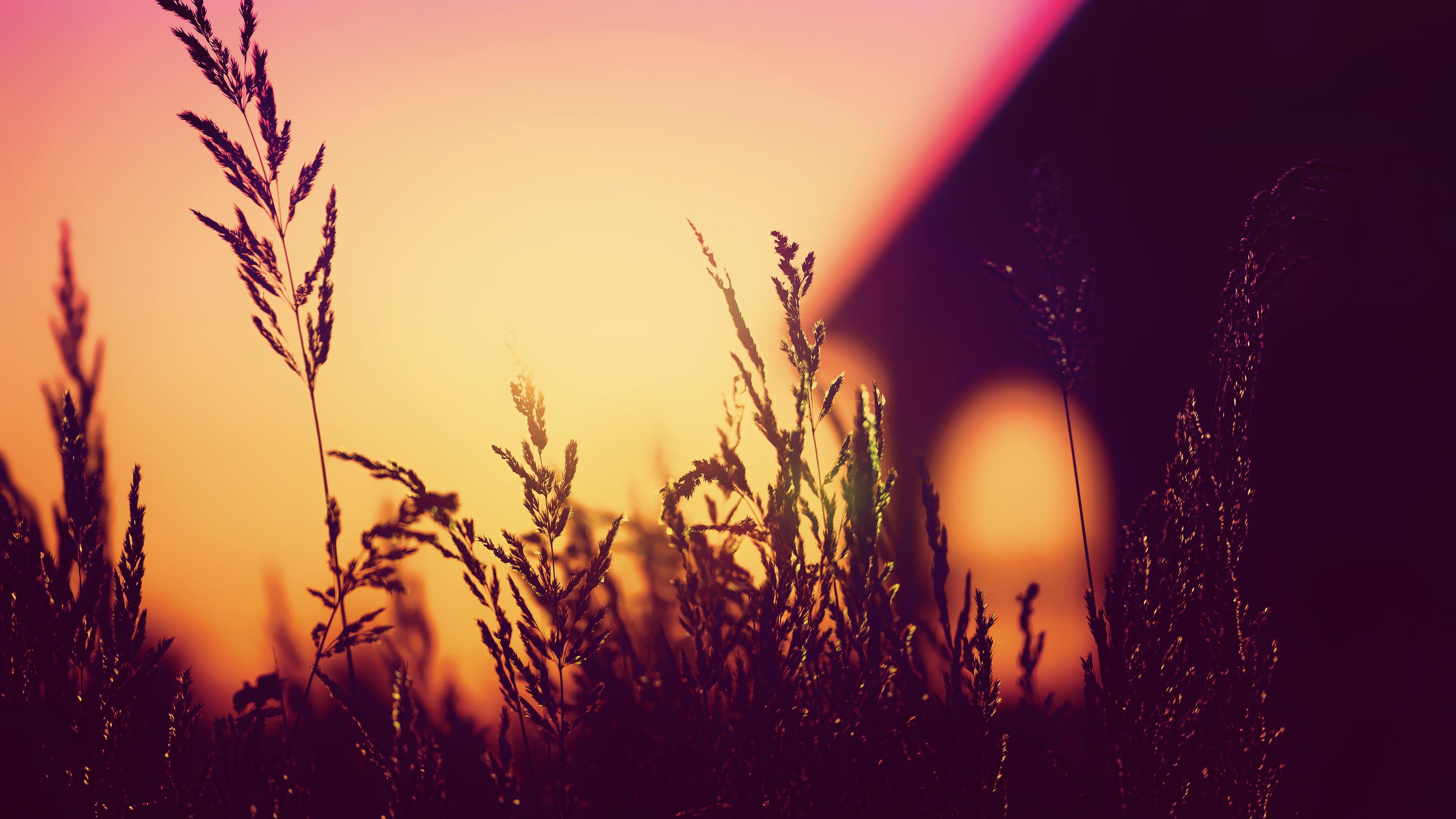 plants blurred silhouette sunset 4k 1551643354 - Plants Blurred Silhouette Sunset 4k - sunset wallpapers, silhouette wallpapers, photography wallpapers, nature wallpapers, hd-wallpapers, blur wallpapers, 4k-wallpapers