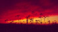 poland sunset 4k 1551644222 200x110 - Poland Sunset 4k - sunset wallpapers, poland wallpapers, nature wallpapers, hd-wallpapers, evening wallpapers, 4k-wallpapers