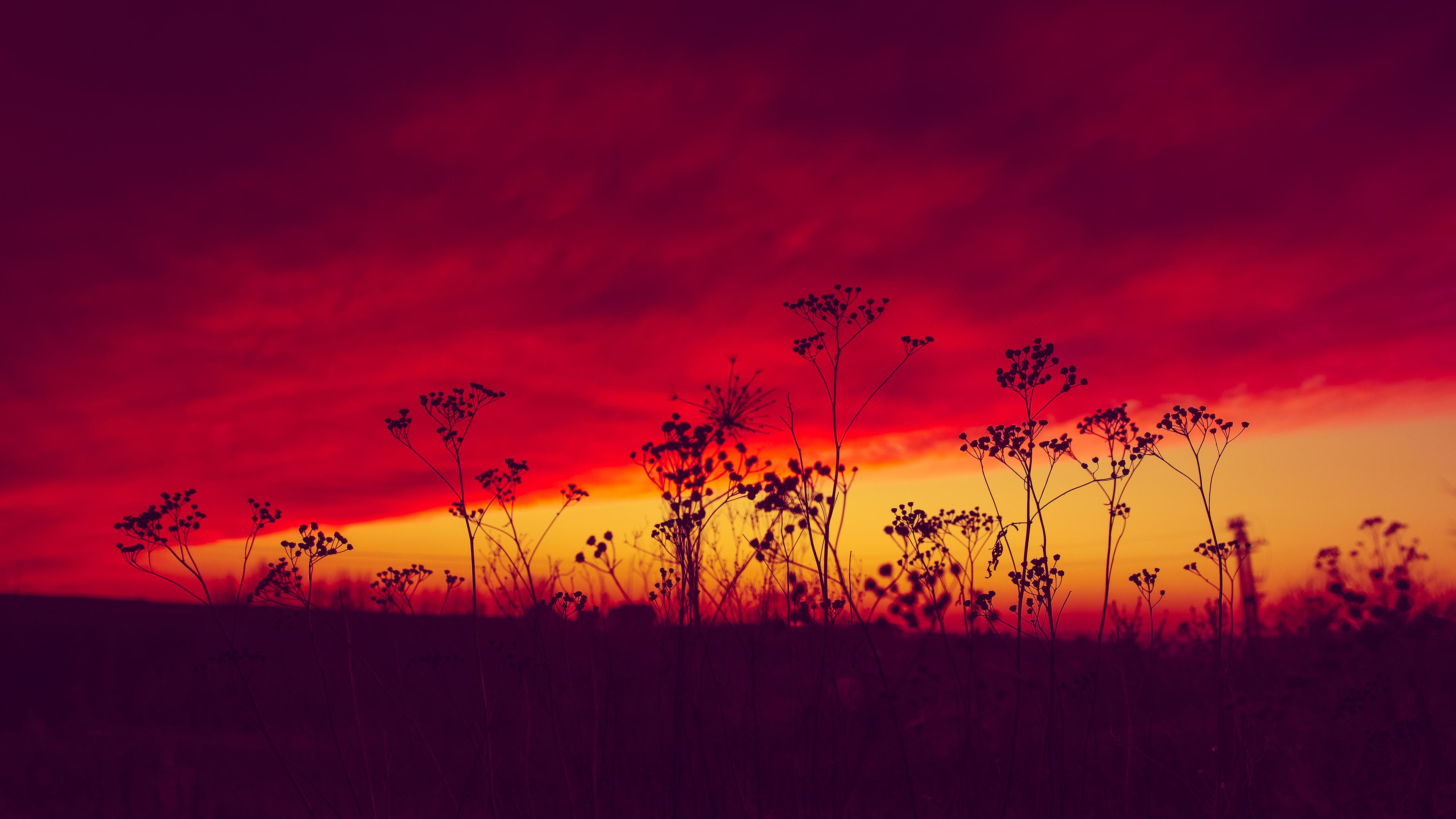 poland sunset 4k 1551644222 - Poland Sunset 4k - sunset wallpapers, poland wallpapers, nature wallpapers, hd-wallpapers, evening wallpapers, 4k-wallpapers