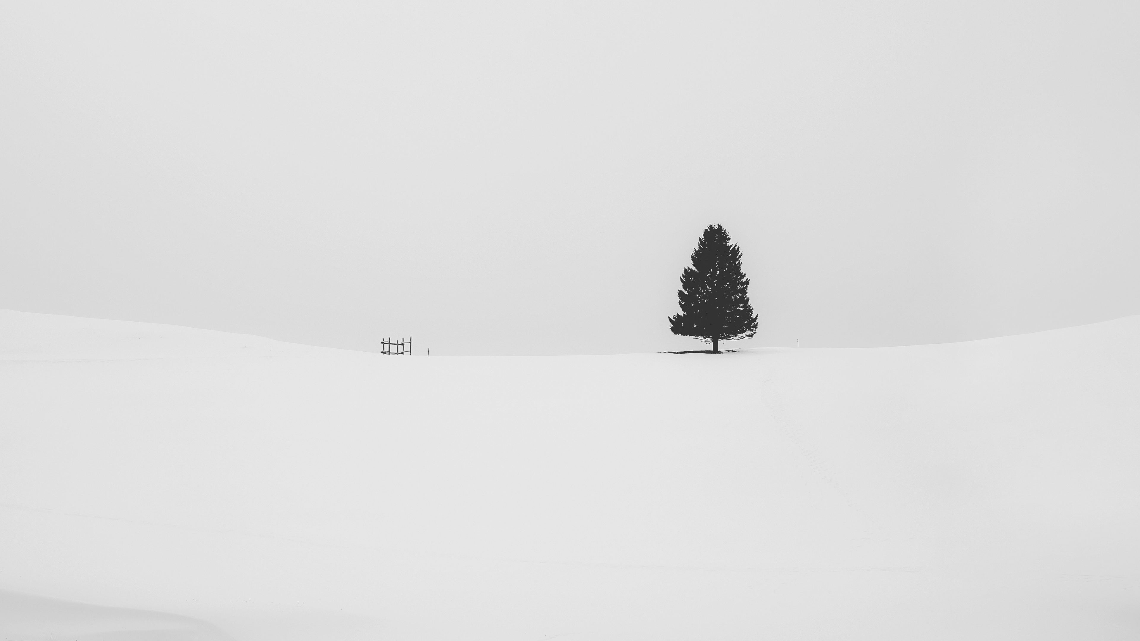 Wallpaper 4k Snow Tree Minimal 4k 4k Wallpapers Hd Wallpapers Minimalism Wallpapers Minimalist Wallpapers Nature Wallpapers Snow Wallpapers Tree Wallpapers