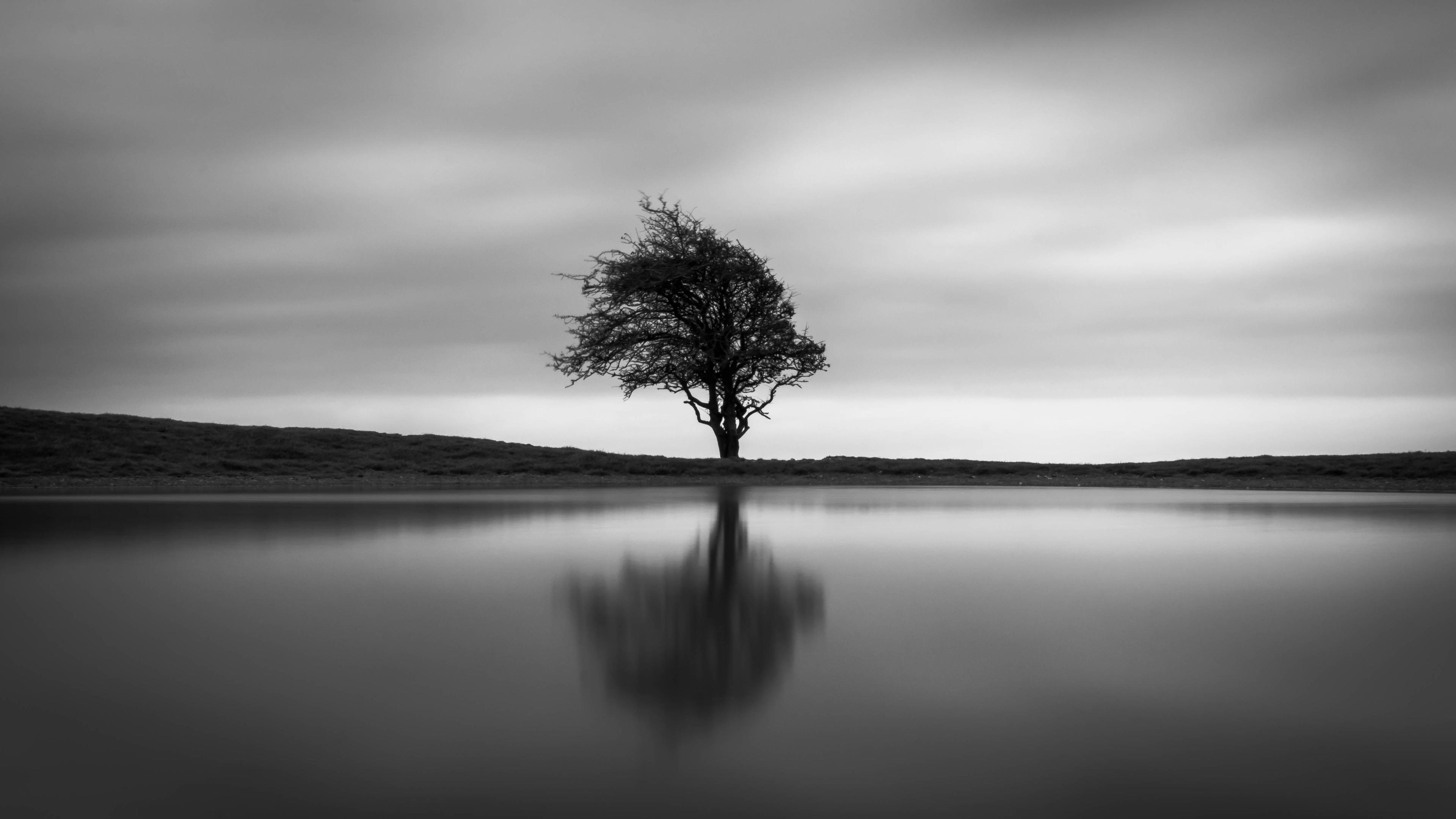 solo tree 1551644417 - Solo Tree - tree wallpapers, nature wallpapers, monochrome wallpapers, black and white wallpapers, 4k-wallpapers