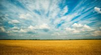 yellow grass field 4k 1551643822 200x110 - Yellow Grass Field 4k - nature wallpapers, hd-wallpapers, grass wallpapers, field wallpapers, farm wallpapers, 4k-wallpapers