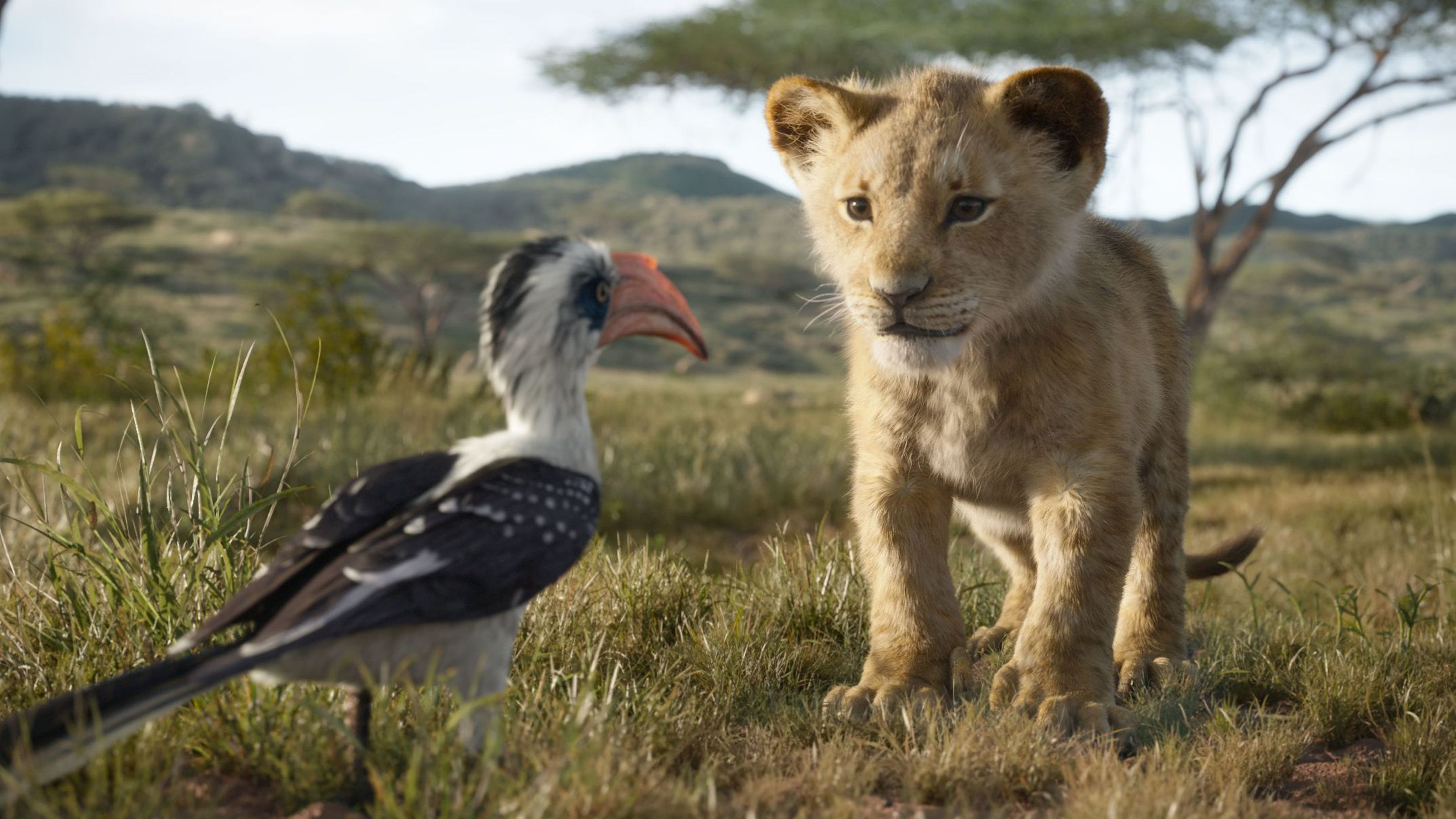 Wallpaper 4k The Lion King Simba 4k 2019 Movies Wallpapers