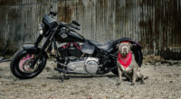harley davidson and dog 1560535683 200x110 - Harley Davidson And Dog - hd-wallpapers, bikes wallpapers, 5k wallpapers, 4k-wallpapers