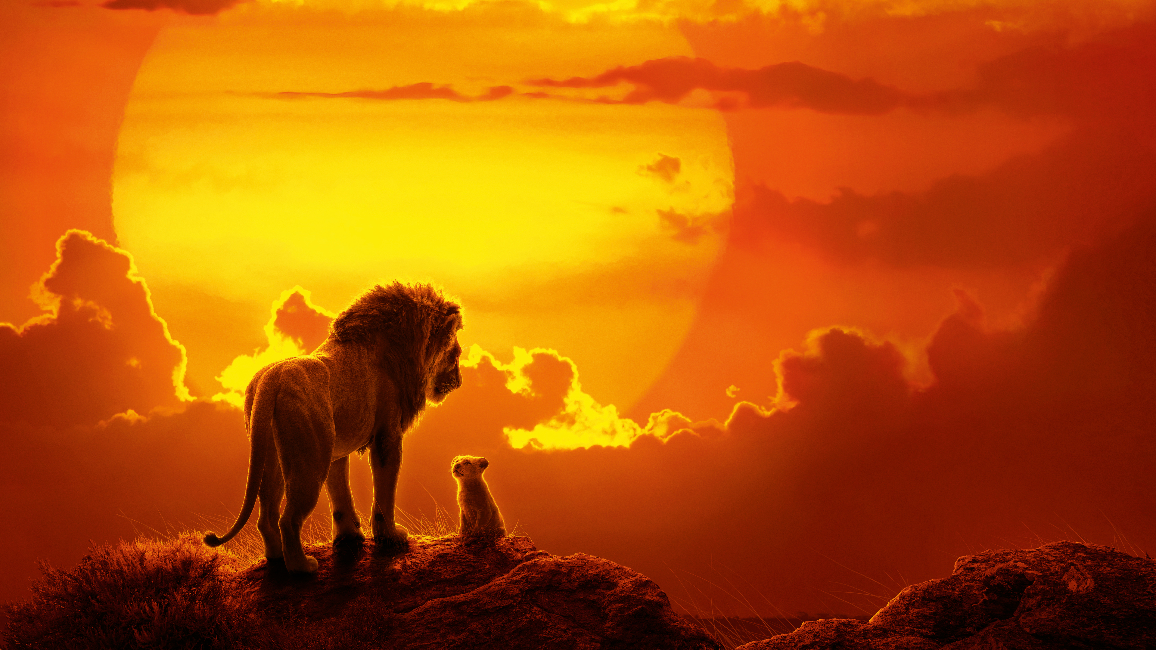 the lion king movie 1562107252 - The Lion King Movie - the lion king wallpapers, simba wallpapers, movies wallpapers, lion wallpapers, hd-wallpapers, disney wallpapers, 8k wallpapers, 5k wallpapers, 4k-wallpapers, 2019 movies wallpapers