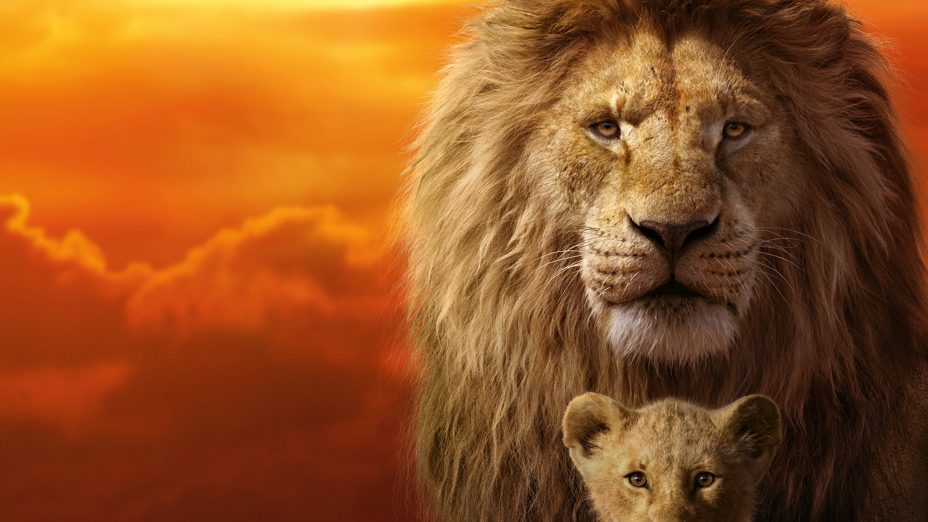 the lion king 1562107131 - The Lion King - the lion king wallpapers, simba wallpapers, movies wallpapers, lion wallpapers, hd-wallpapers, disney wallpapers, 8k wallpapers, 5k wallpapers, 4k-wallpapers, 2019 movies wallpapers