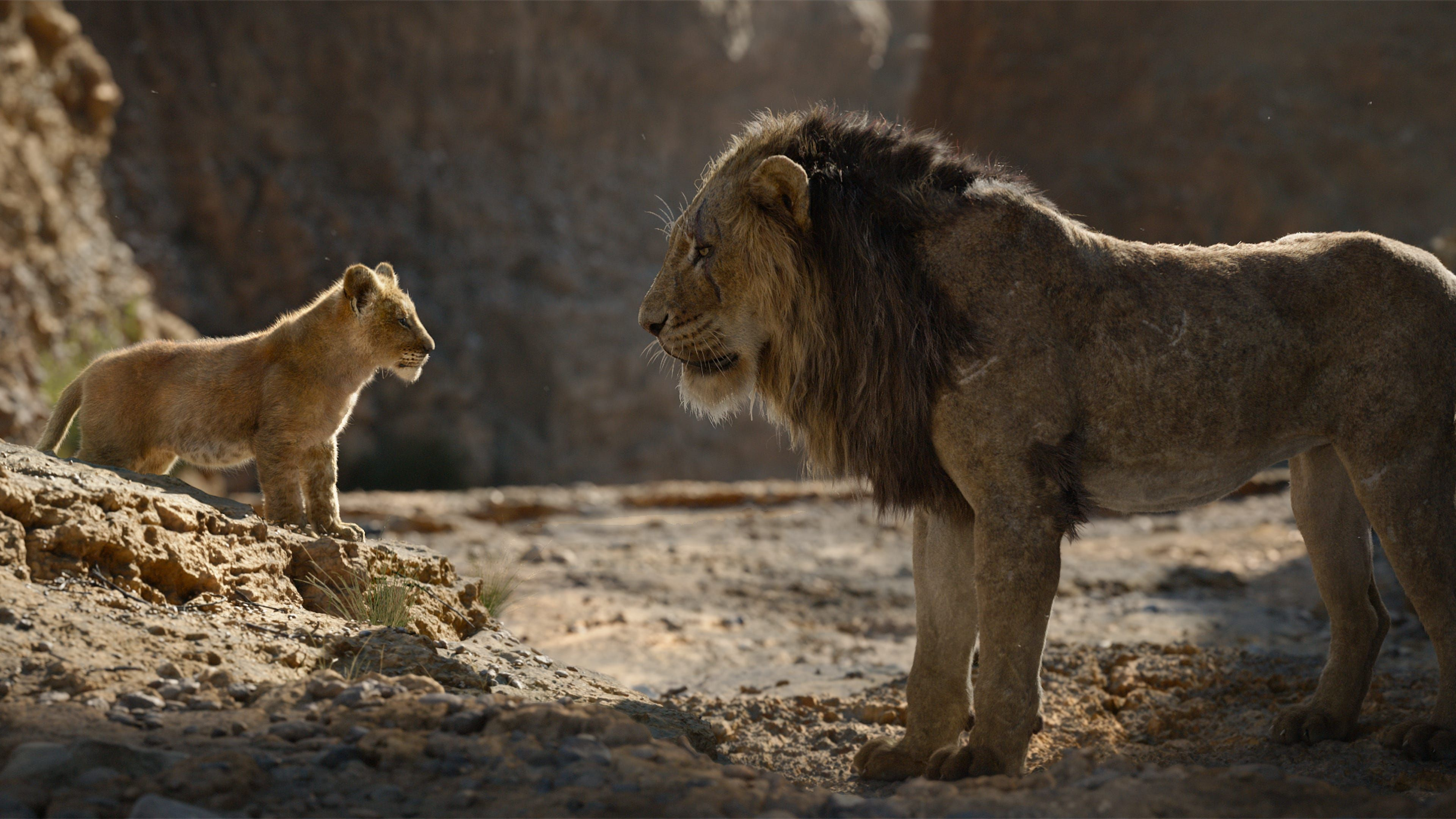 simba and scar 1565055682 - Simba And Scar - the lion king wallpapers, simba wallpapers, movies wallpapers, lion wallpapers, hd-wallpapers, disney wallpapers, 4k-wallpapers, 2019 movies wallpapers