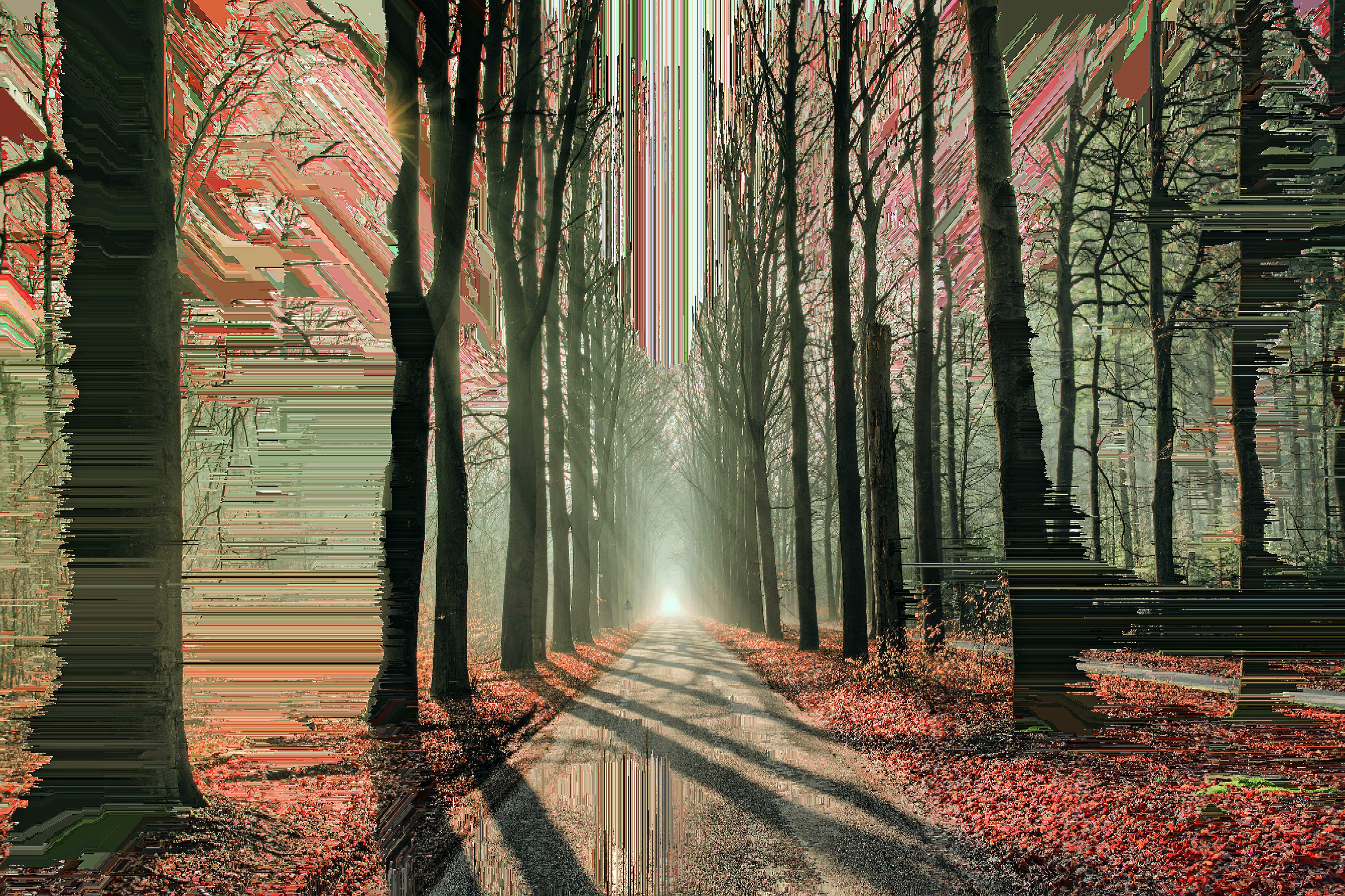 artistic glitch trees road 1574938680 - Artistic Glitch Trees Road -