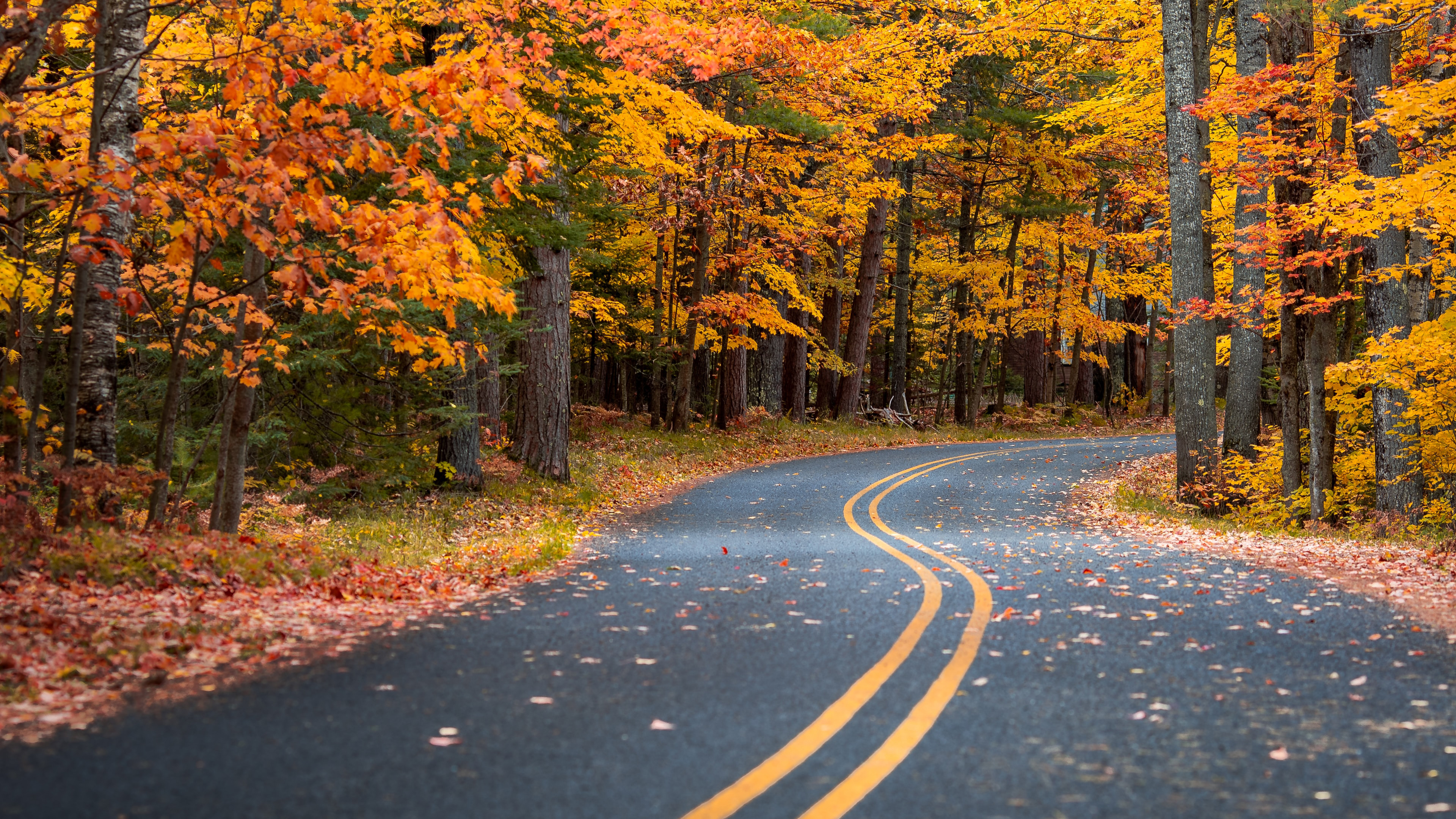 autumn drive road 1574938577 - Autumn Drive Road -