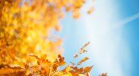 autumn leave 1574937494 200x110 - Autumn Leave -