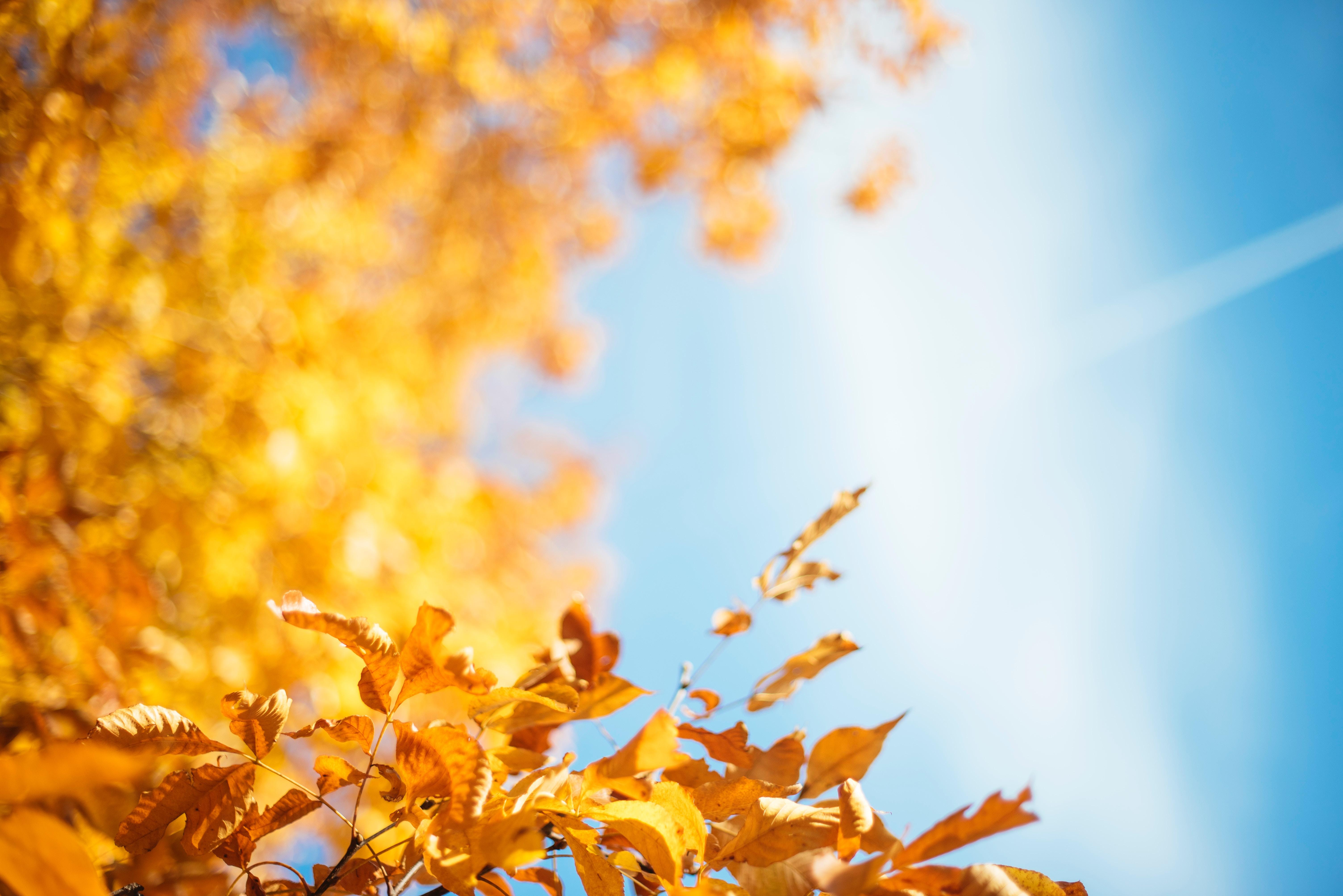 autumn leave 1574937494 - Autumn Leave -