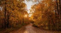 autumn road 1574937762 200x110 - Autumn Road -