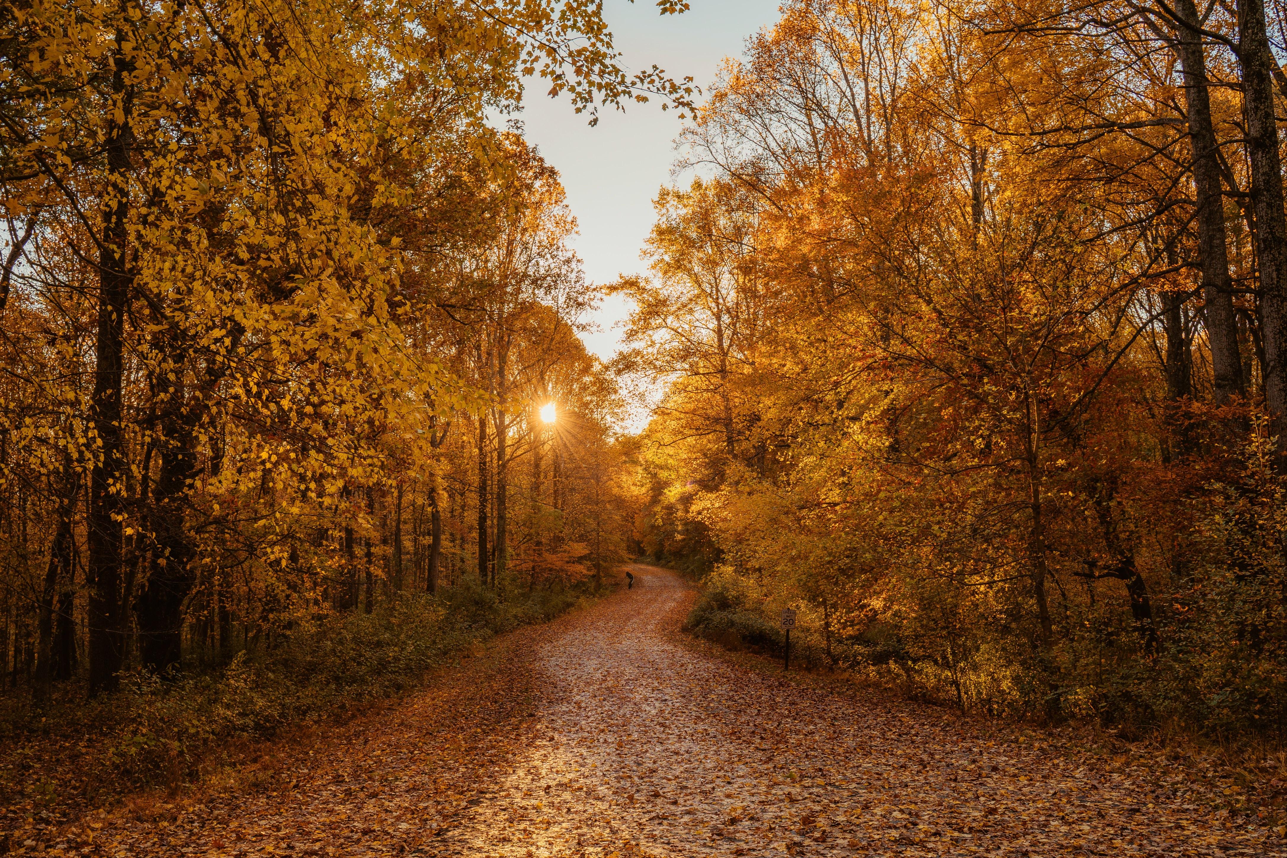 autumn road 1574937762 - Autumn Road -