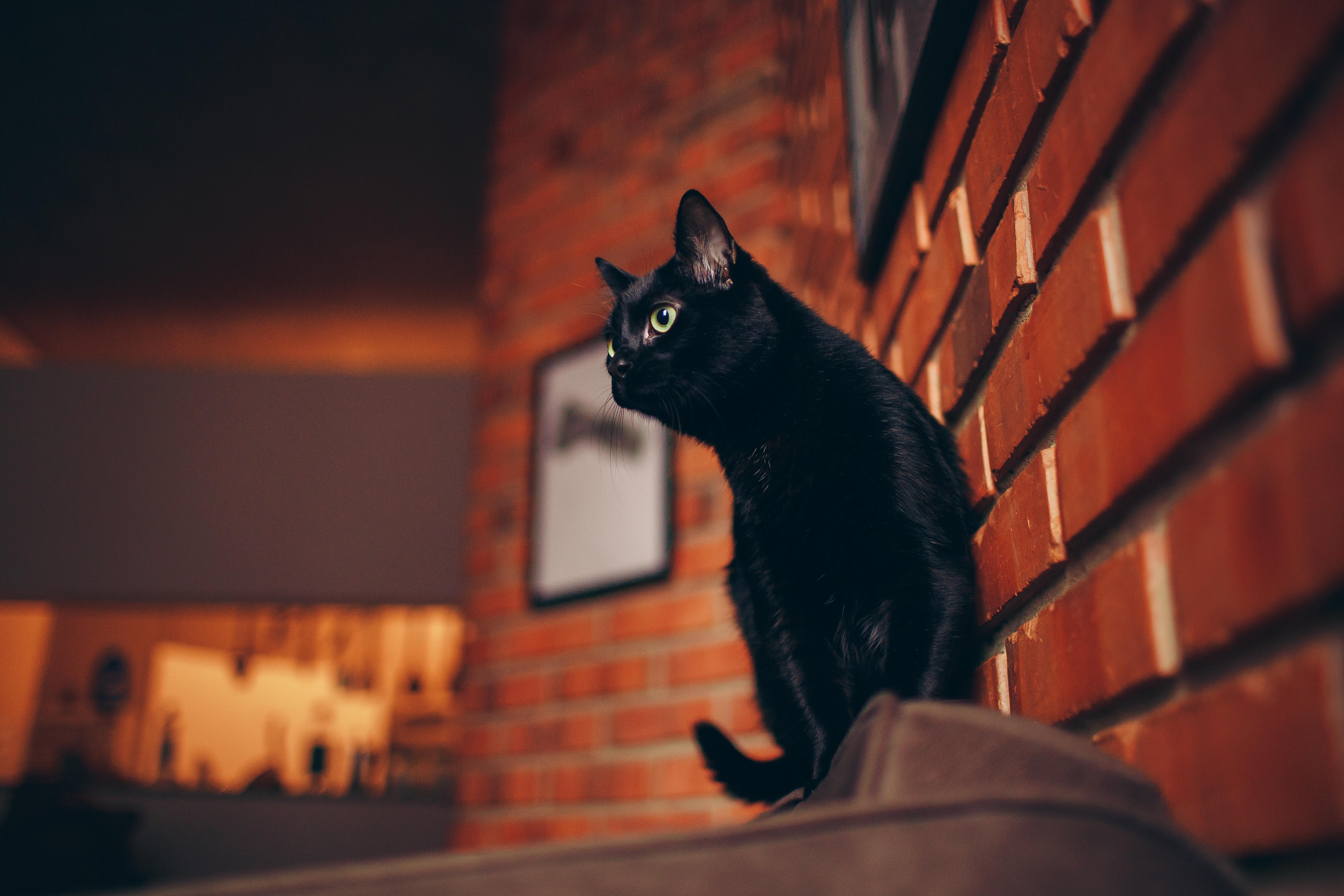 black cat portrait 1574938126 - Black Cat Portrait -