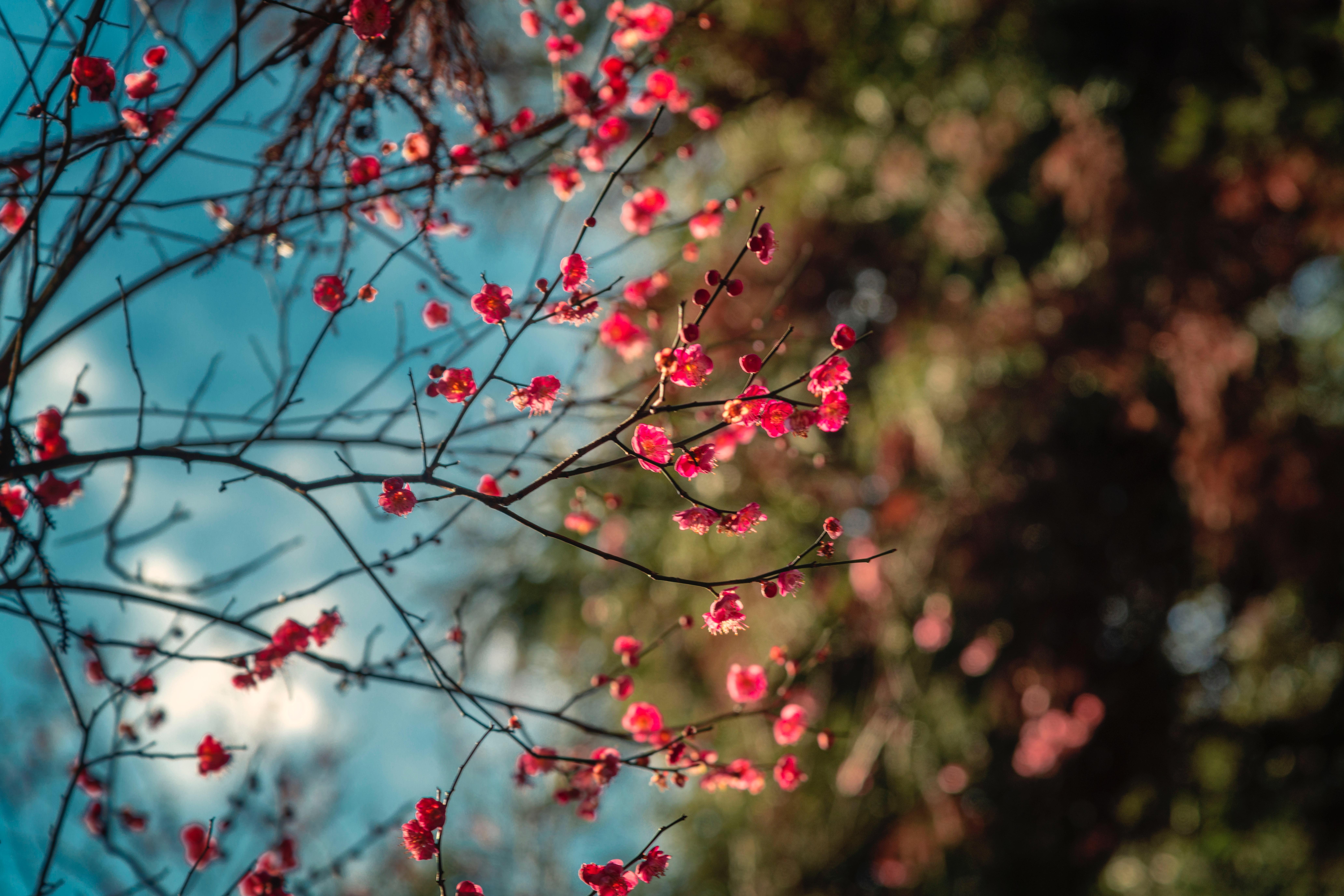 blossom petal flowers 1574937756 - Blossom Petal Flowers -
