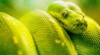 boa green snake 1574938011 200x110 - Boa Green Snake -