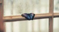 butterfly sitting on window side 1574938212 200x110 - Butterfly Sitting On Window Side -