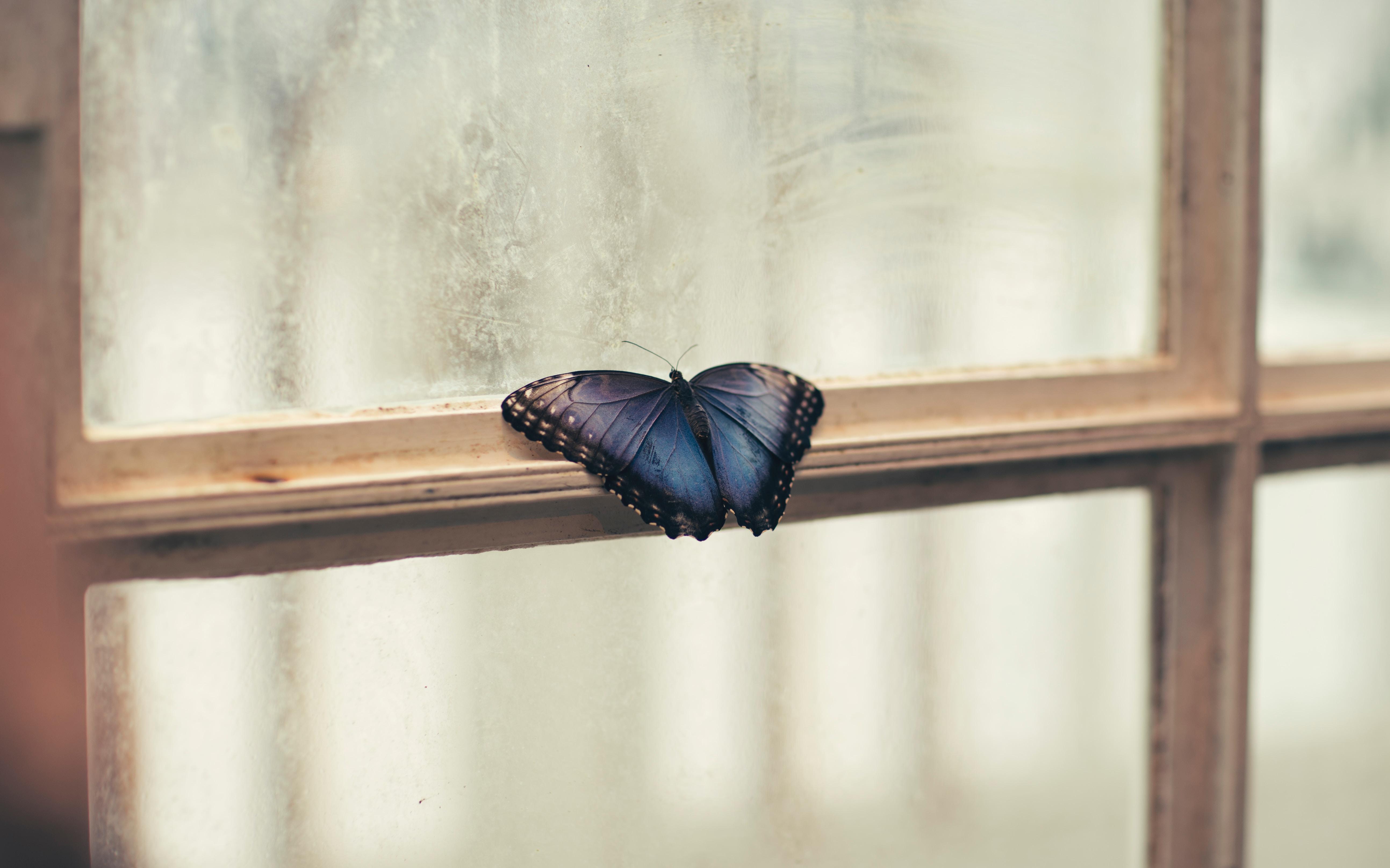 butterfly sitting on window side 1574938212 - Butterfly Sitting On Window Side -