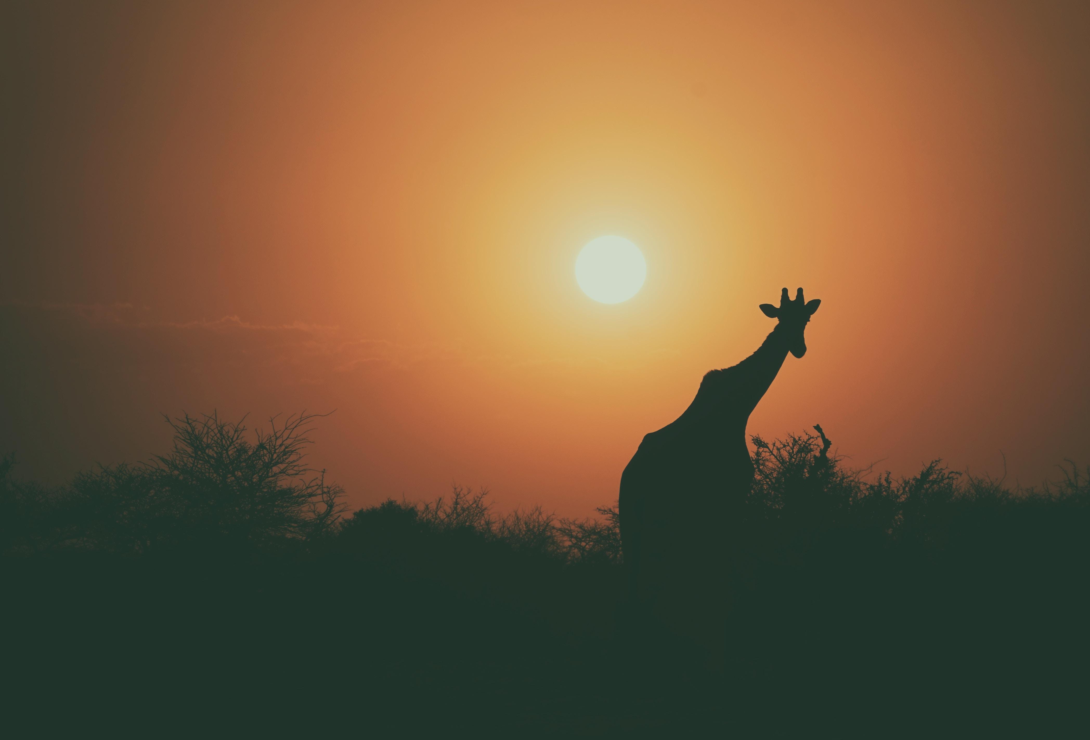 camel silhouette 1574937978 - Camel Silhouette -