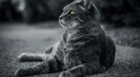 cat monochrome 1574938122 200x110 - Cat Monochrome -