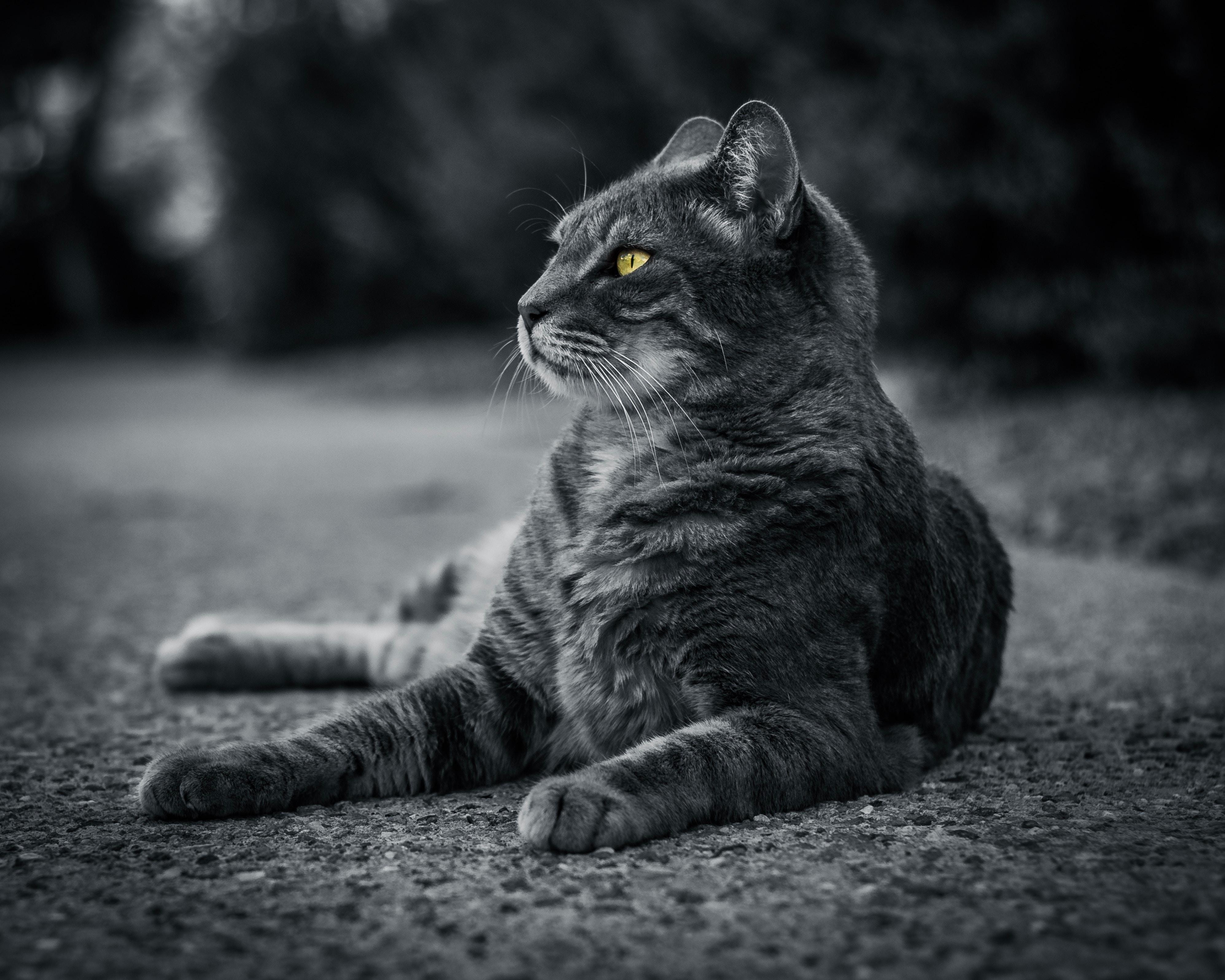 cat monochrome 1574938122 - Cat Monochrome -