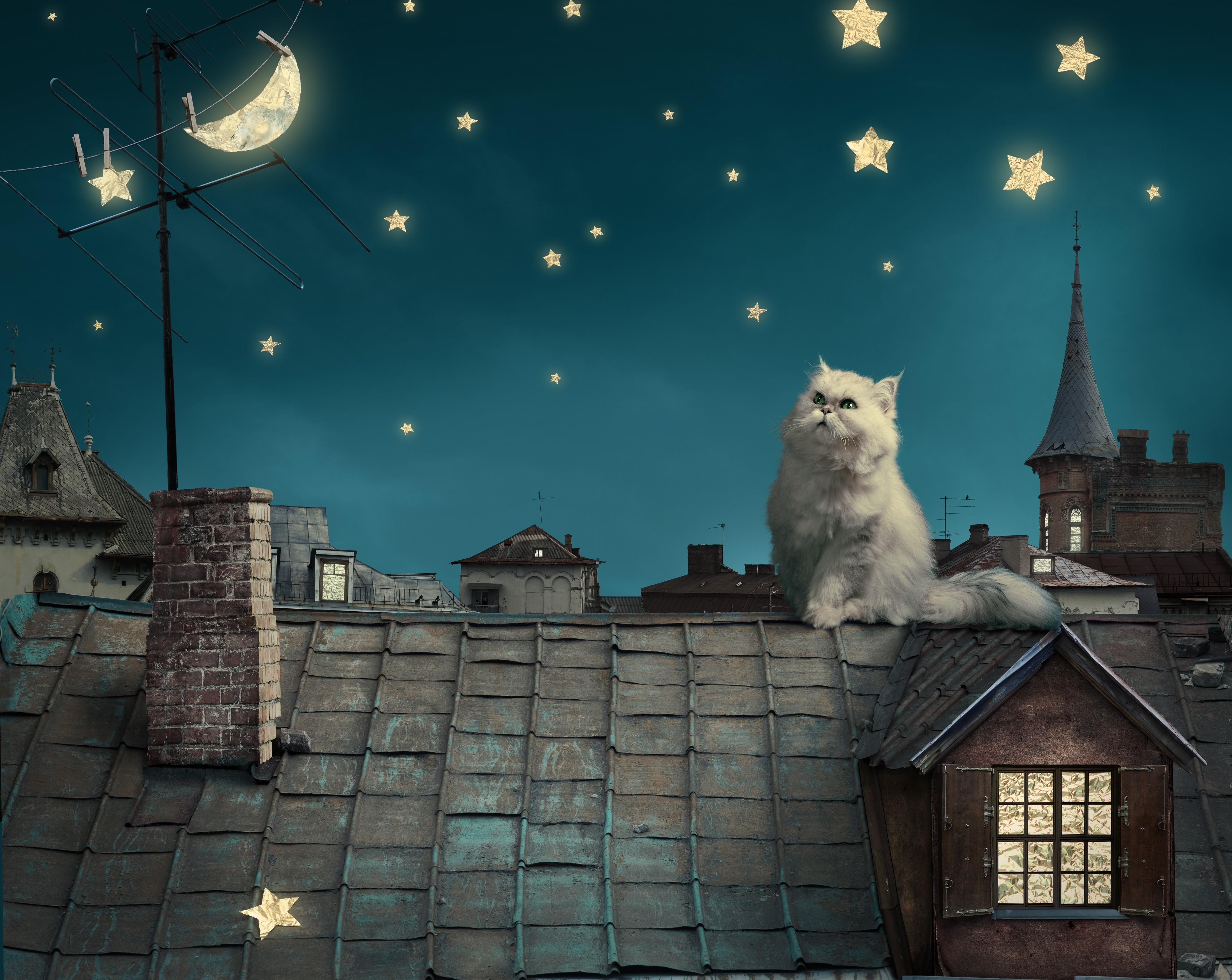 cat moon stars digital art dreamy 1574938041 - Cat Moon Stars Digital Art Dreamy -