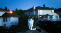 cat on roof 1574938056 200x110 - Cat On Roof -