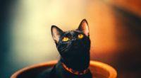 cat 1574938022 200x110 - Cat -