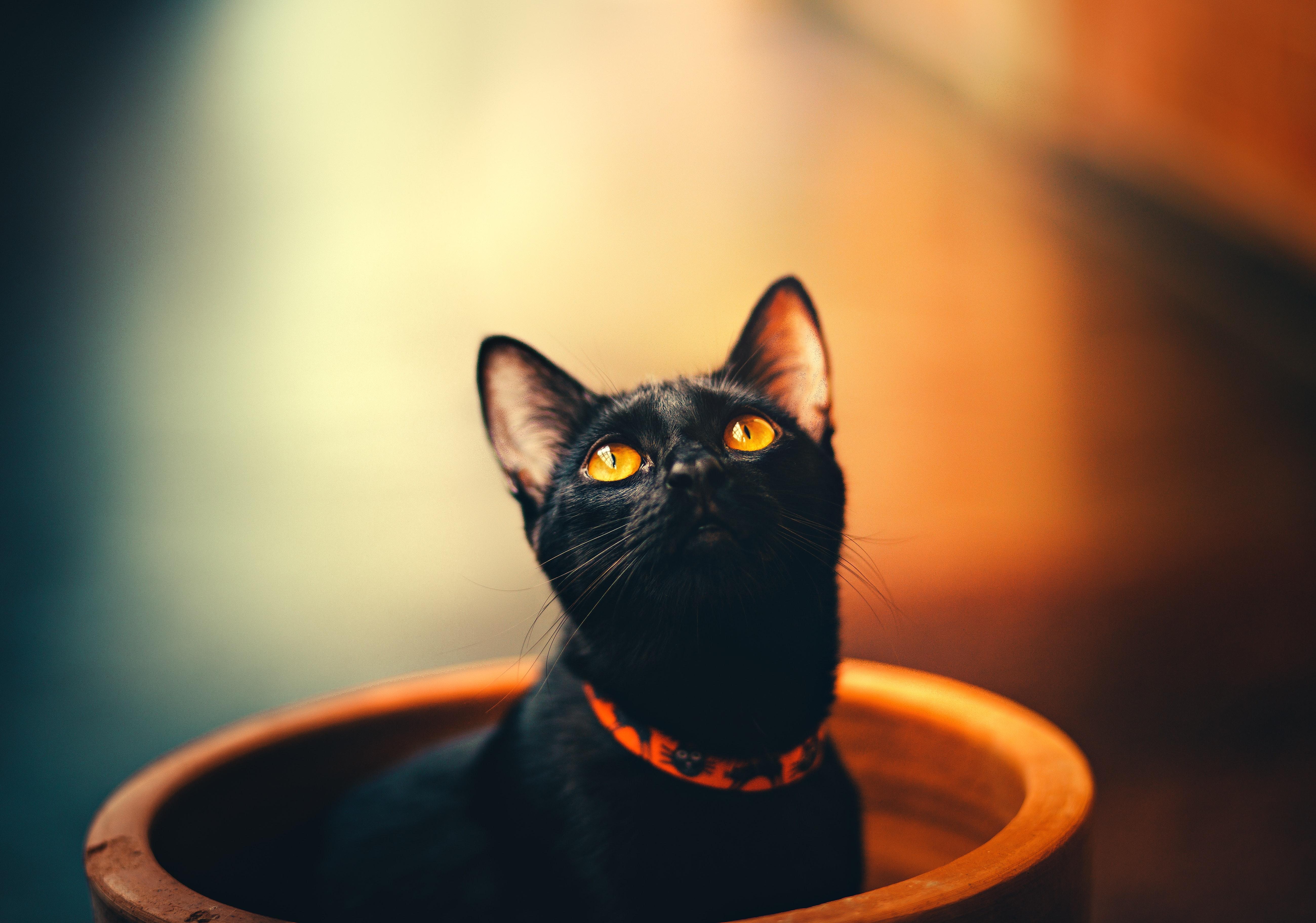 cat 1574938022 - Cat -