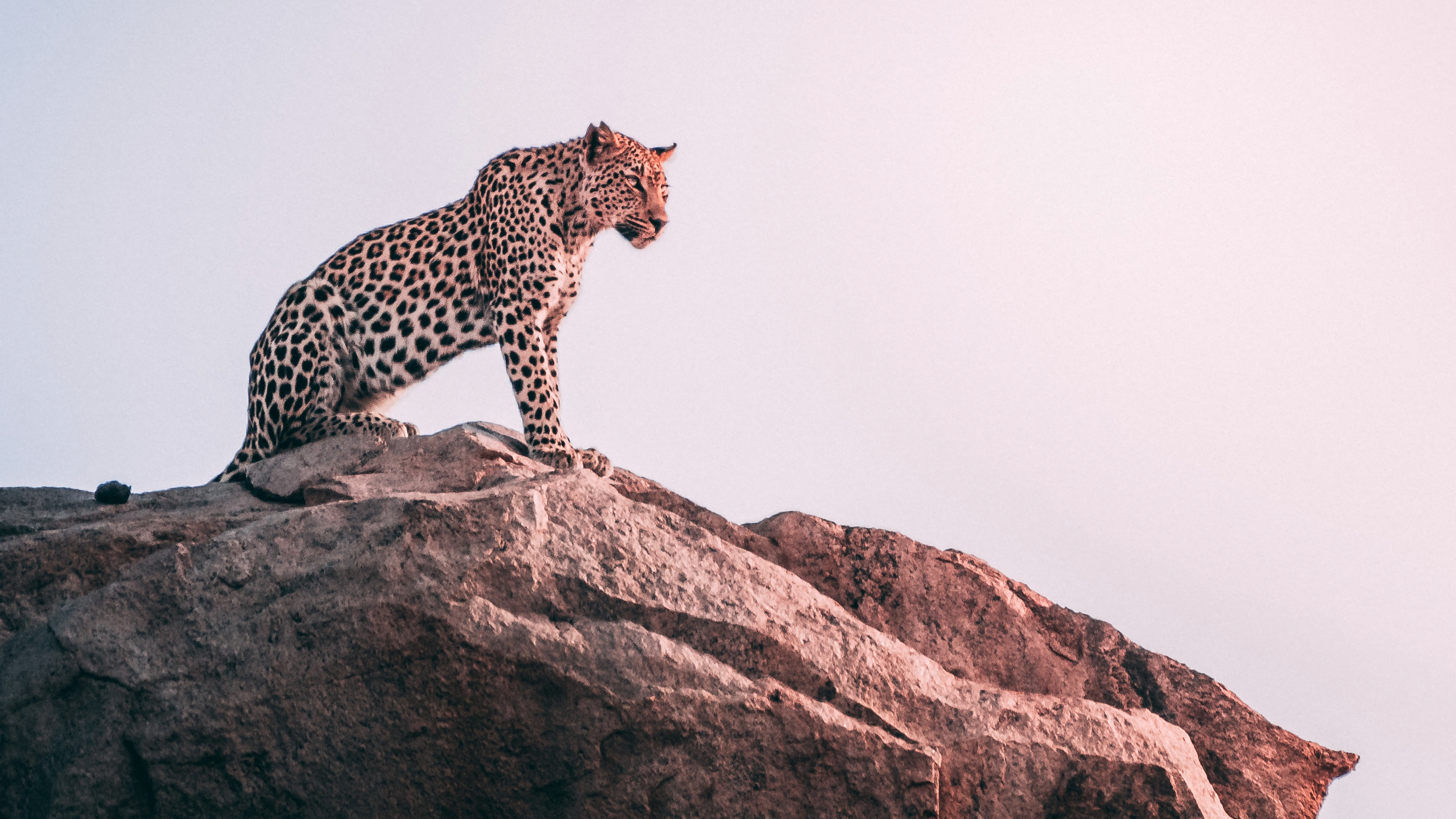 cheetah sight 1574938128 - Cheetah Sight -