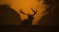 deer silhouette 1574937979 200x110 - Deer Silhouette -