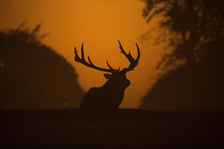 deer silhouette 1574937979 - Deer Silhouette -