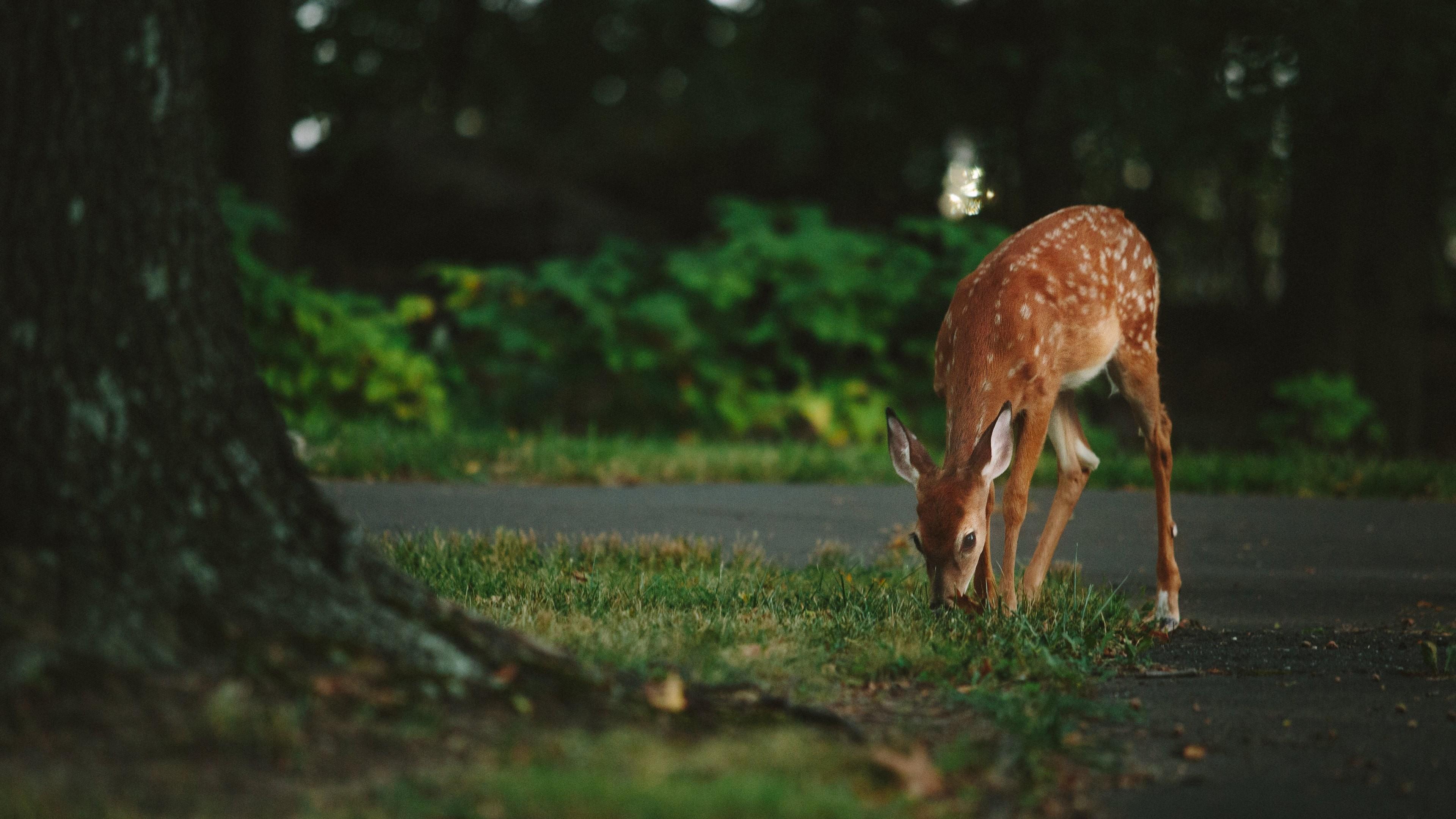 deer 1574937989 - Deer -
