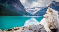 dog lake louise 1574937975 200x110 - Dog Lake Louise -