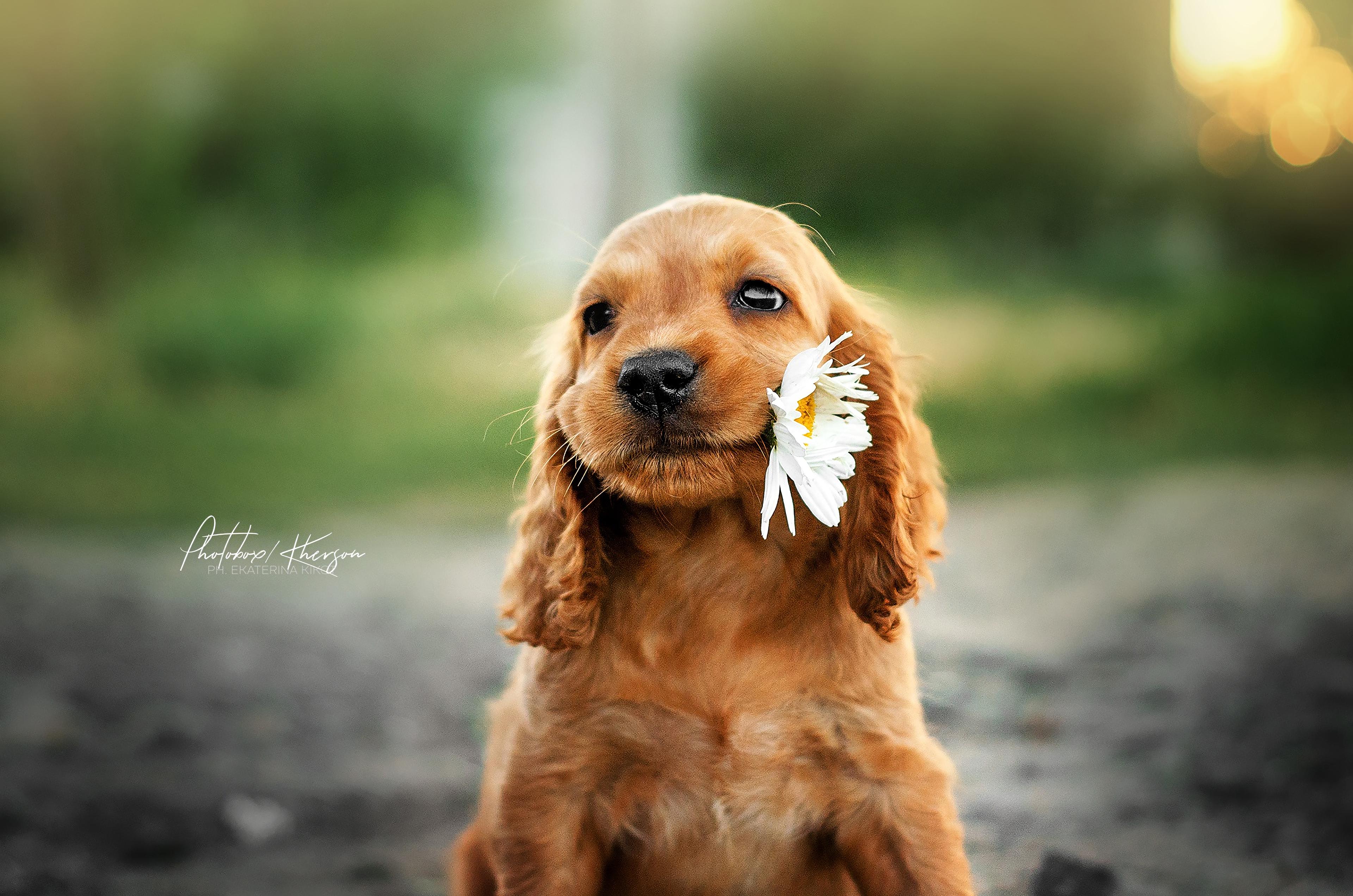 dog with flower in mouth 1574938221 - Dog With Flower In Mouth -