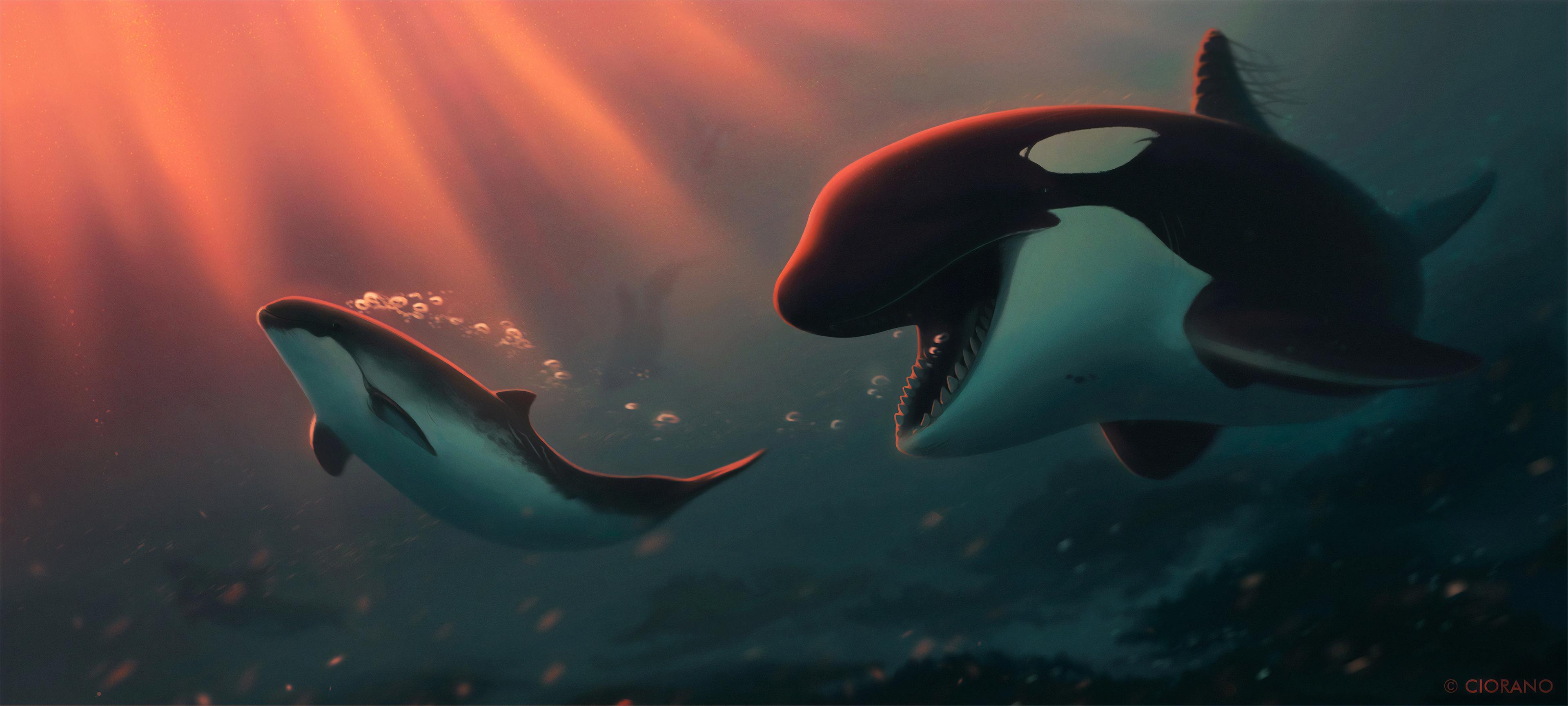 dolphin bubbles 1574938111 - Dolphin Bubbles -