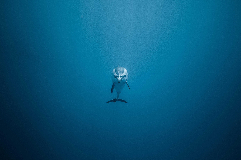 dolphin underwater 1574938193 - Dolphin Underwater -
