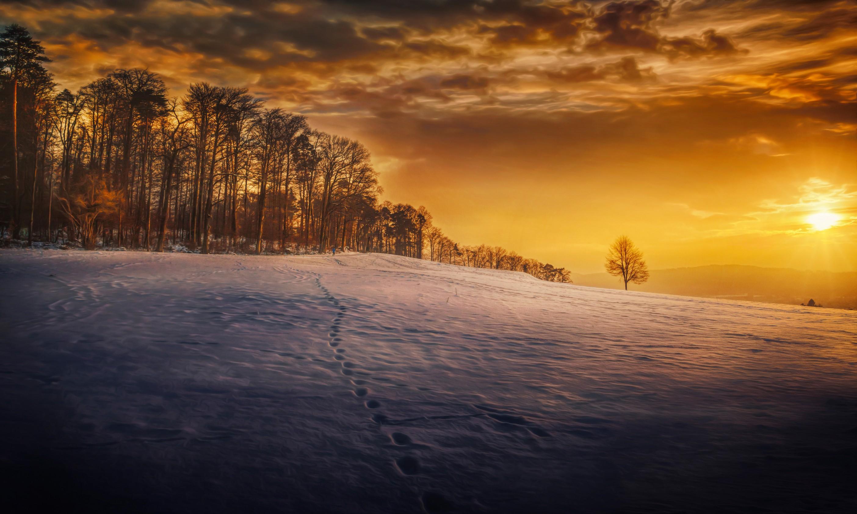 evening snow landscape trees 1574939591 - Evening Snow Landscape Trees -