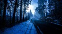 forest snowy dark evening 1574939514 200x110 - Forest Snowy Dark Evening -