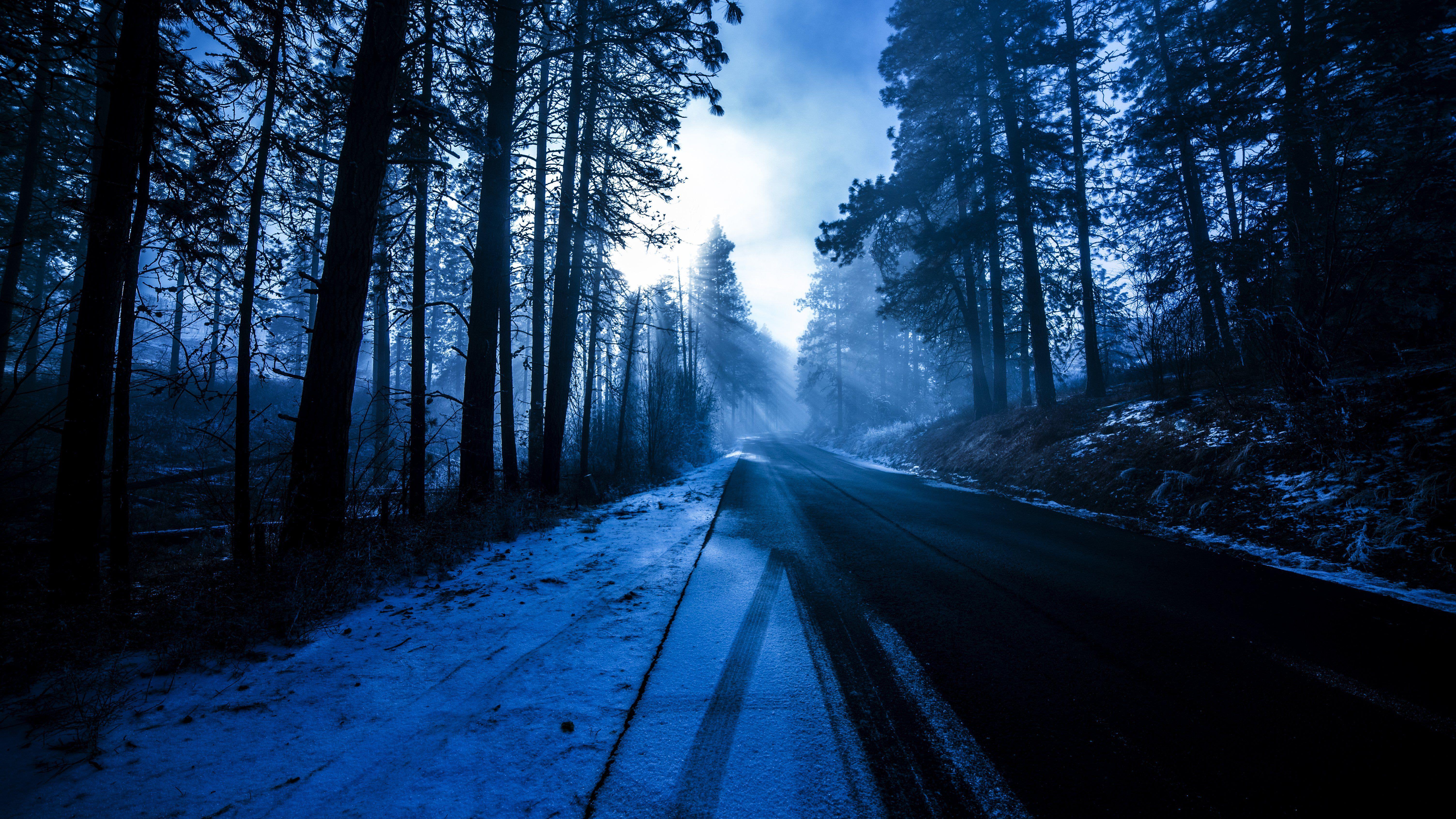 forest snowy dark evening 1574939514 - Forest Snowy Dark Evening -