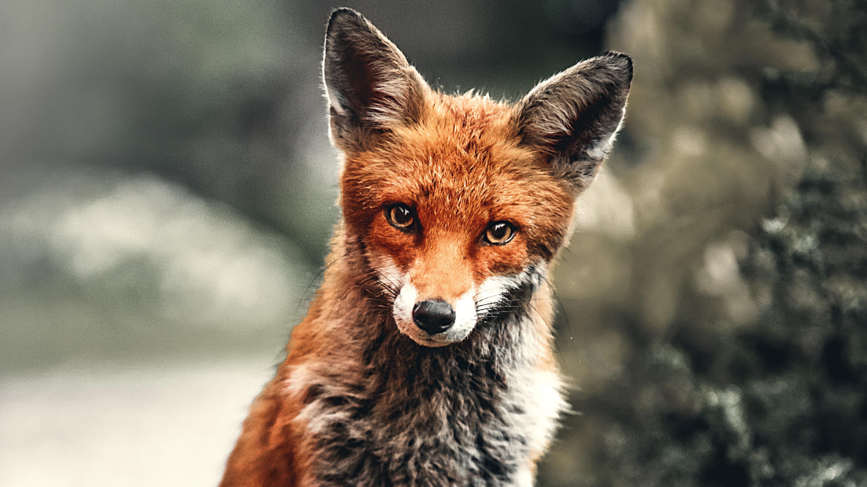fox depth 1574938115 - Fox Depth -