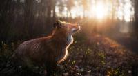 fox outdoor 1574938121 200x110 - Fox Outdoor -