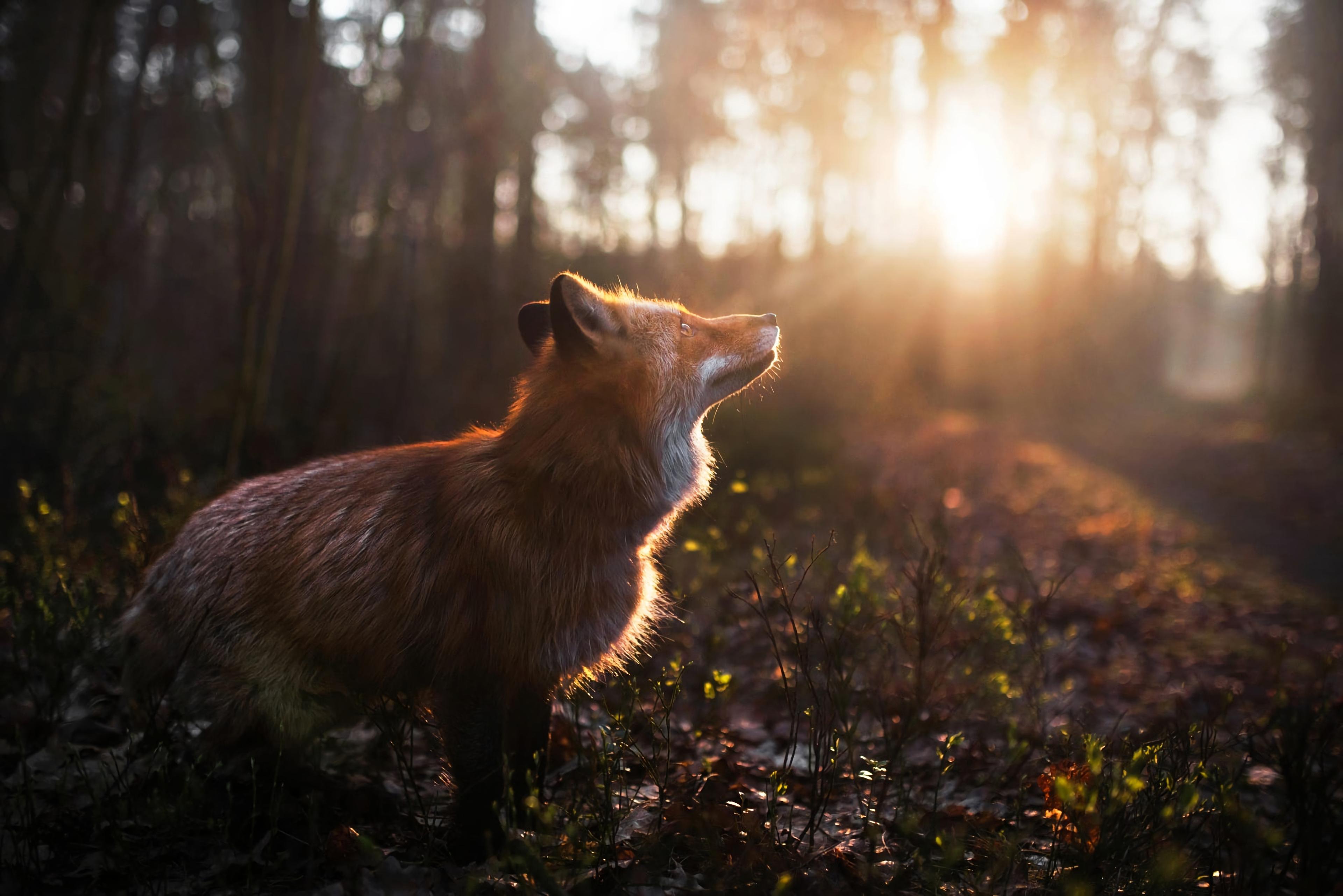 fox outdoor 1574938121 - Fox Outdoor -