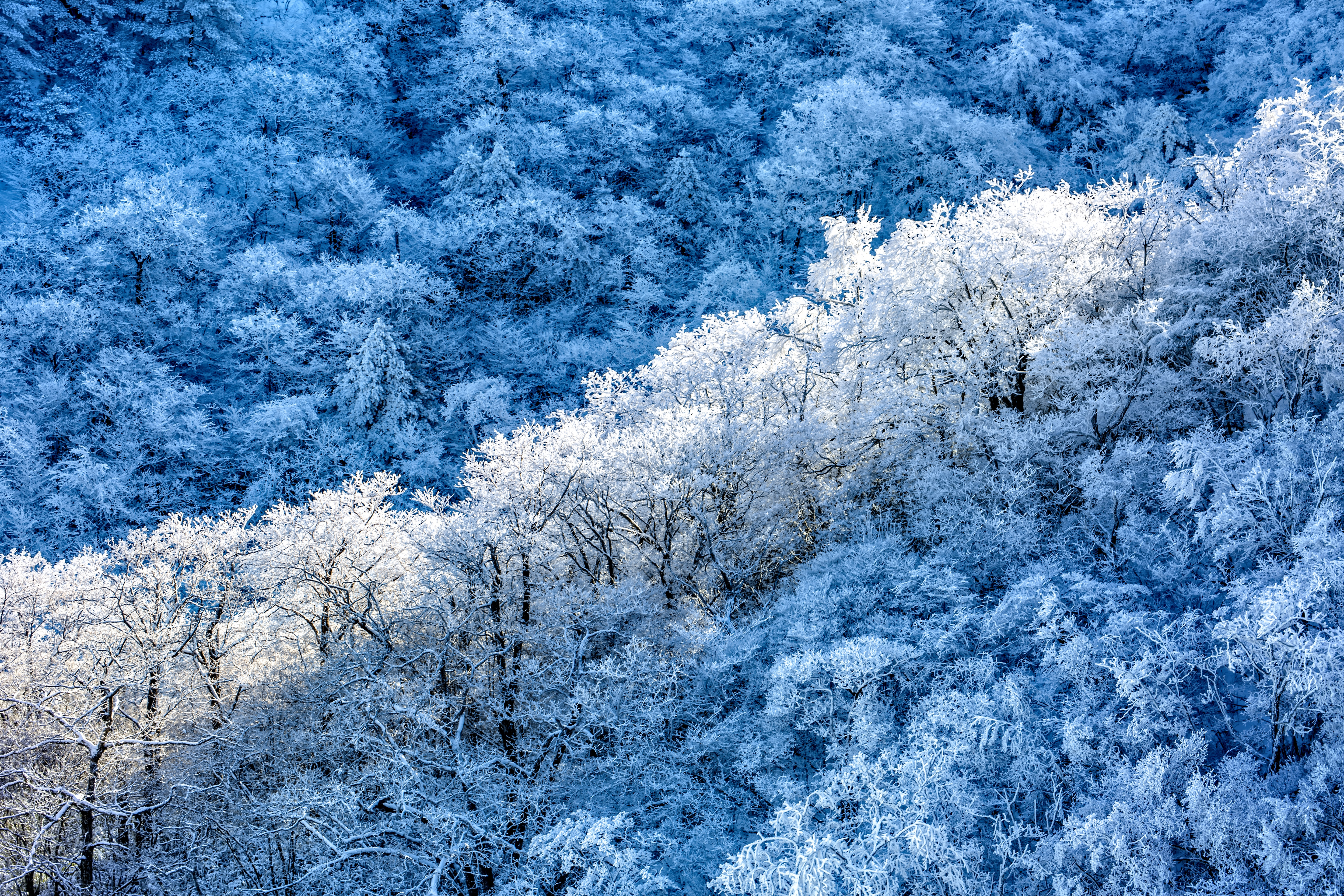 frost snow 1574937873 - Frost Snow -